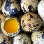 Польза перепелиных яиц для организма человека: как правильно употреблять, состав и калорийность