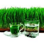 Пророщенная пшеница польза и вред; Советы врачей как их принимать и проращивать