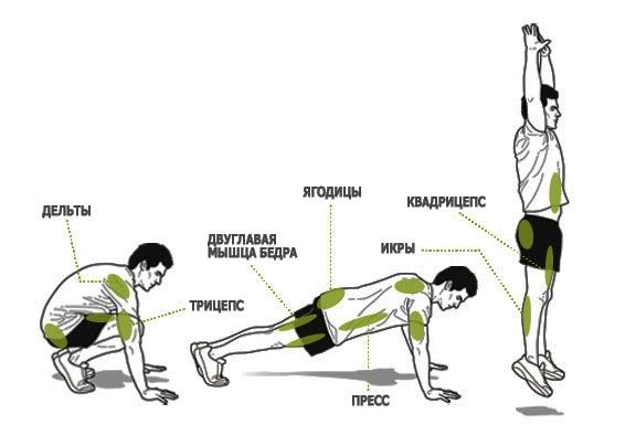 Какие мышцы работают во время тренировки берпи