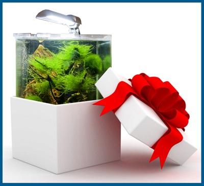 Как выбрать аквариум в подарок?