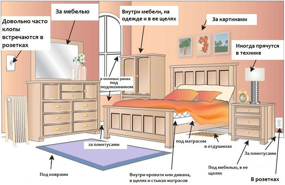 Борьба с клопами в квартире - используем самостоятельно самые эффективные средства в домашних условиях