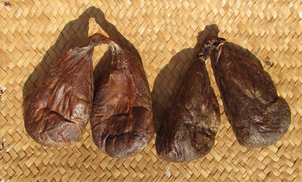 Струя бобра − лечебные свойства и как ее принимать