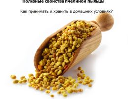 Пыльца пчелиная полезные свойства, противопоказания, как принимать и отзывы