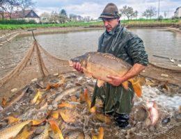 Универсальная приманка для рыбака Fish Hunt